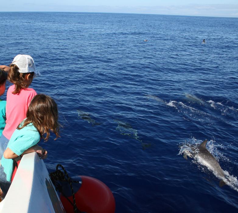 LaPalma_delfin-niños-Consej.MAmb_